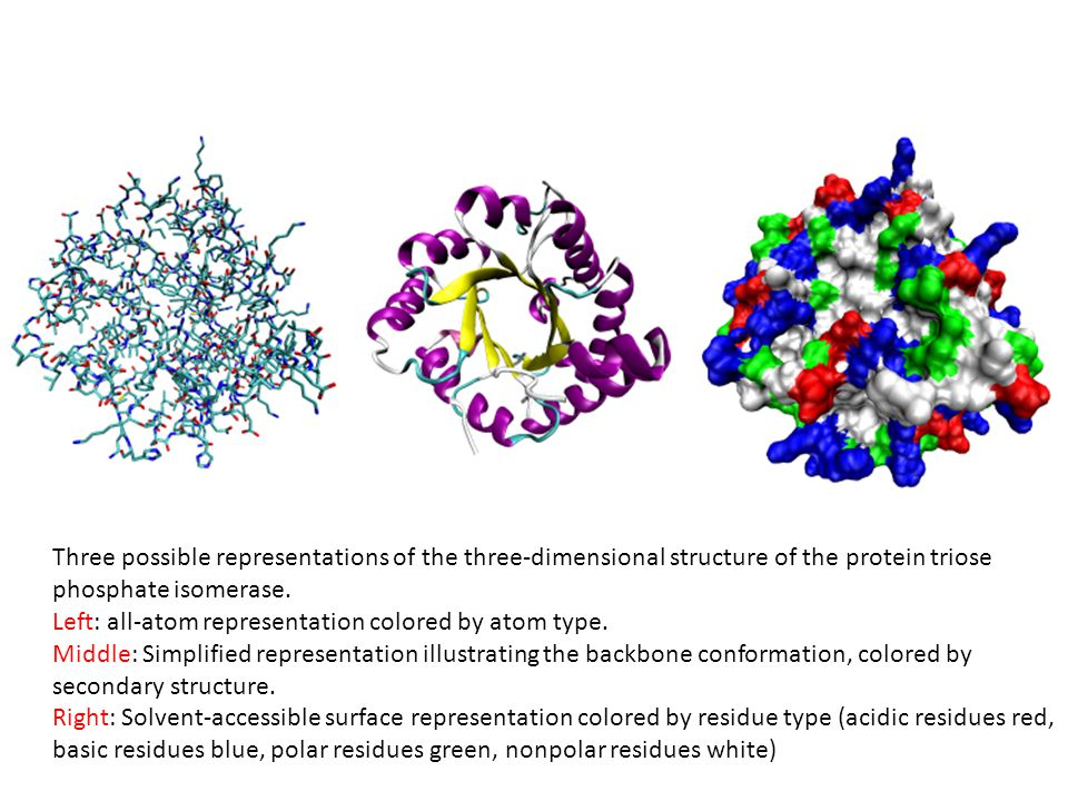 Three possible representations of the three-dimensional structure of the protein triose phosphate isomerase.