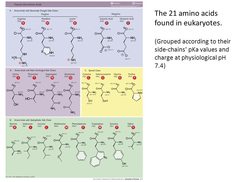 The 21 amino acids found in eukaryotes.