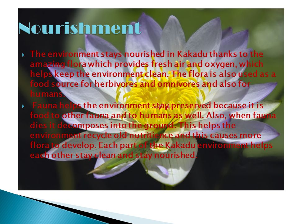  The environment stays nourished in Kakadu thanks to the amazing flora which provides fresh air and oxygen, which helps keep the environment clean. T