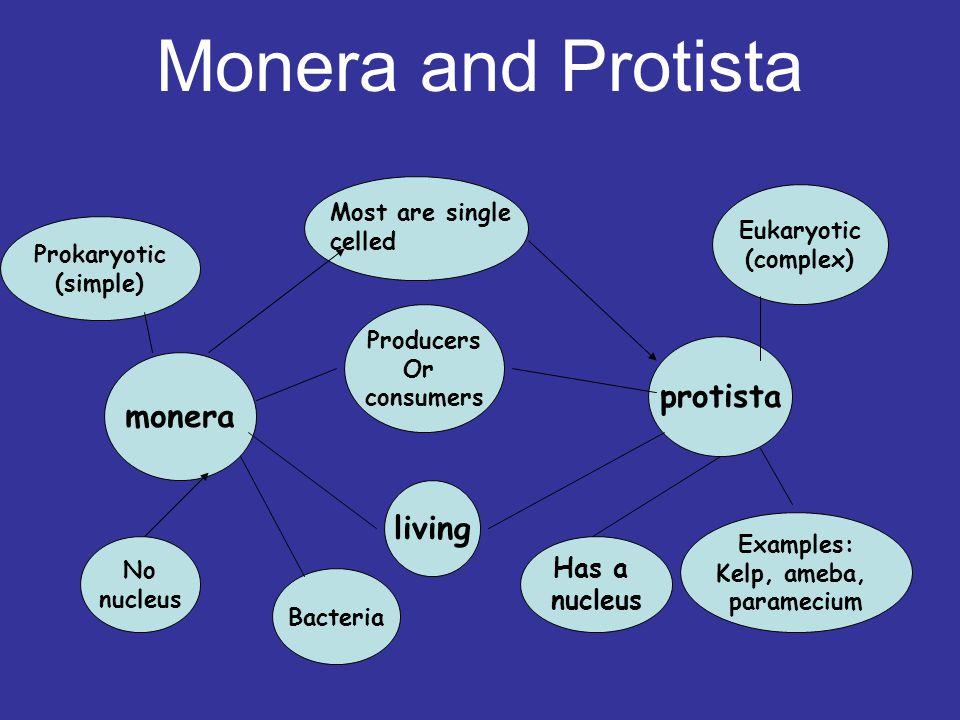 monera protista Most are single celled No nucleus Bacteria Has a nucleus Producers Or consumers Examples: Kelp, ameba, paramecium Eukaryotic (complex)