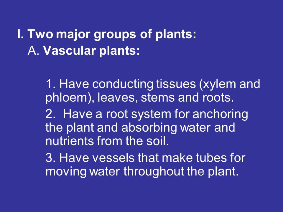 I. Two major groups of plants: A. Vascular plants: 1. Have conducting tissues (xylem and phloem), leaves, stems and roots. 2. Have a root system for a
