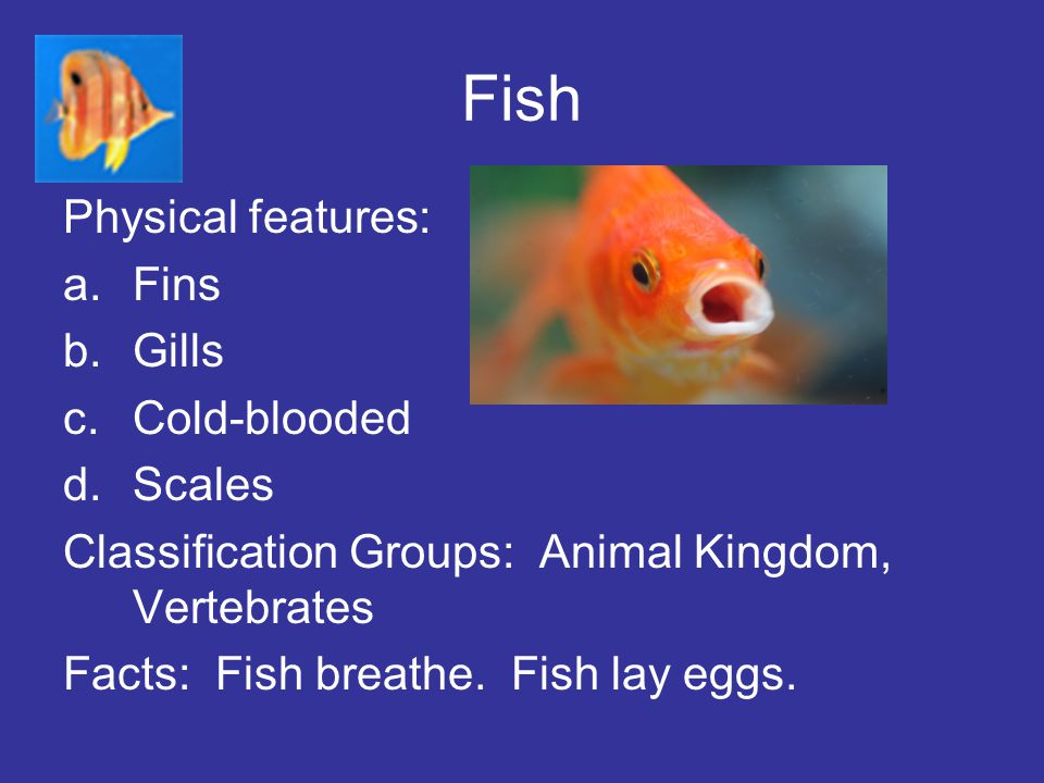 Fish Physical features: a.Fins b.Gills c.Cold-blooded d.Scales Classification Groups: Animal Kingdom, Vertebrates Facts: Fish breathe. Fish lay eggs.