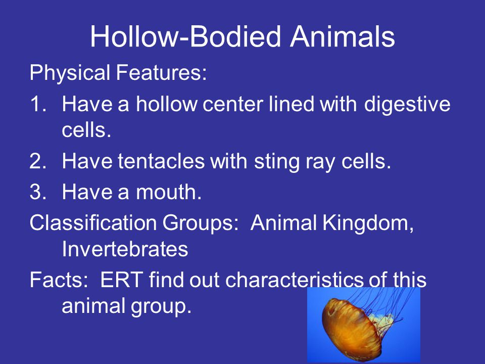 Hollow-Bodied Animals Physical Features: 1.Have a hollow center lined with digestive cells. 2.Have tentacles with sting ray cells. 3.Have a mouth. Cla