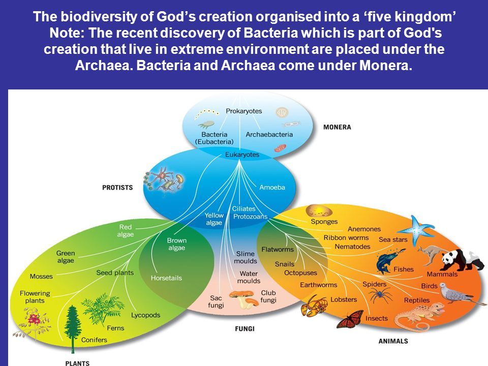 The biodiversity of God's creation organised into a 'five kingdom' Note: The recent discovery of Bacteria which is part of God's creation that live in
