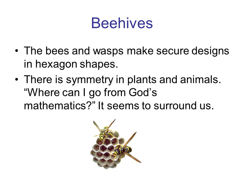 "Beehives The bees and wasps make secure designs in hexagon shapes. There is symmetry in plants and animals. ""Where can I go from God's mathematics?"" I"