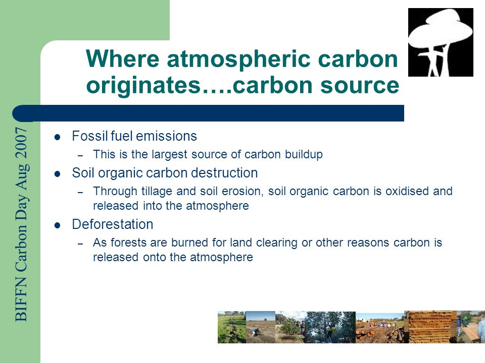 BIFFN Carbon Day Aug 2007 Where does carbon go… carbon sink Diffuses into the oceans – Ocean waters contain dissolved carbon dioxide and calcium carbonate in the form of shells and marine organisms Into plant life (Biosphere) – All living and dead organisms Into soil organic carbon – Anything living in the soil such as plant roots, microbes, or fungus Lithosphere (Earth's crust) – Consists of fossil fuels and sedimentary rock like limestone, dolomite and chalk