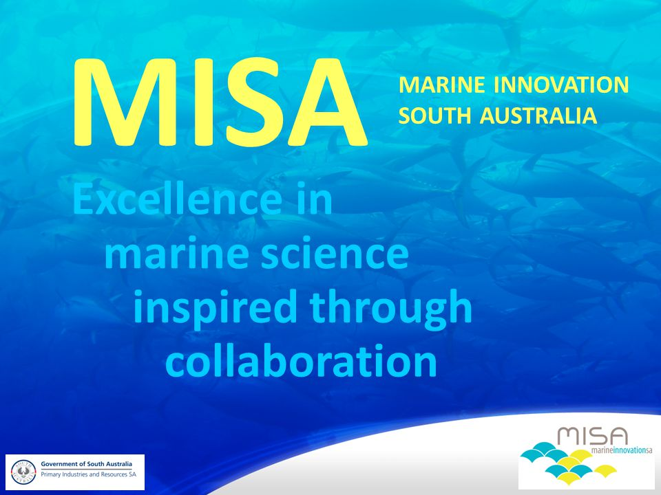 Excellence in MISA marine science inspired through collaboration MARINE INNOVATION SOUTH AUSTRALIA