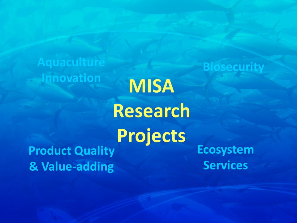 Aquaculture Innovation Biosecurity Ecosystem Services Product Quality & Value-adding MISA Research Projects