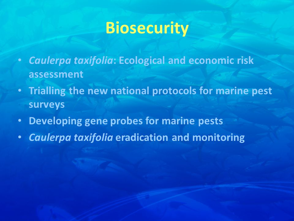 Biosecurity Caulerpa taxifolia: Ecological and economic risk assessment Trialling the new national protocols for marine pest surveys Developing gene probes for marine pests Caulerpa taxifolia eradication and monitoring