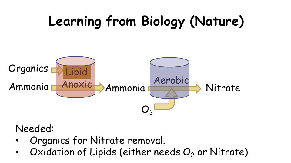 Learning from Biology (Nature) Organics Ammonia Needed: Organics for Nitrate removal.
