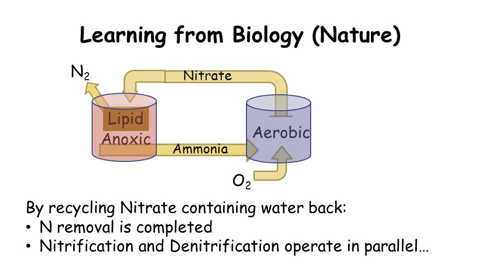 Learning from Biology (Nature) Ammonia By recycling Nitrate containing water back: N removal is completed Nitrification and Denitrification operate in parallel… Anoxic Aerobic Lipid O2O2 N2N2 Nitrate