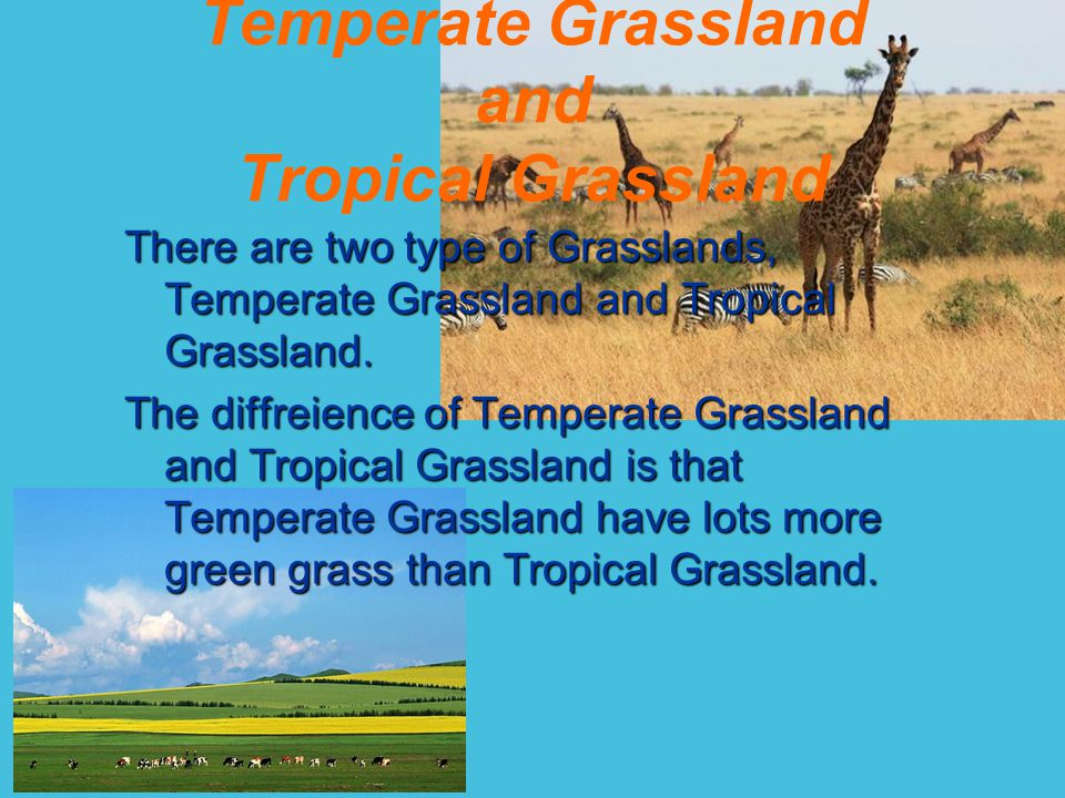 There are two type of Grasslands, Temperate Grassland and Tropical Grassland.