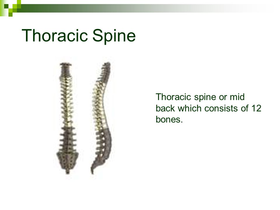 Cervical Spine Cervical spine or neck which consists of 7 relatively small bones.