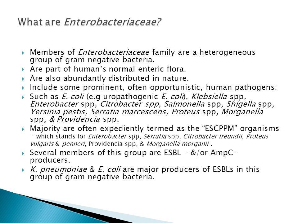  Members of Enterobacteriaceae family are a heterogeneous group of gram negative bacteria.