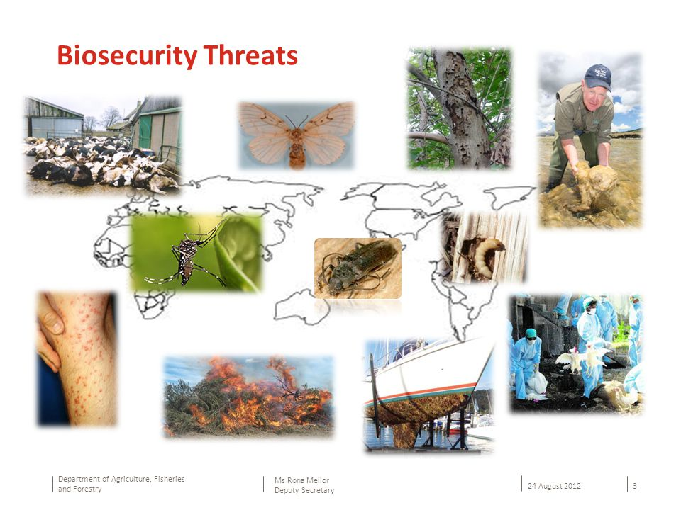 Department of Agriculture, Fisheries and Forestry 3 24 August 2012 Ms Rona Mellor Deputy Secretary Biosecurity Threats
