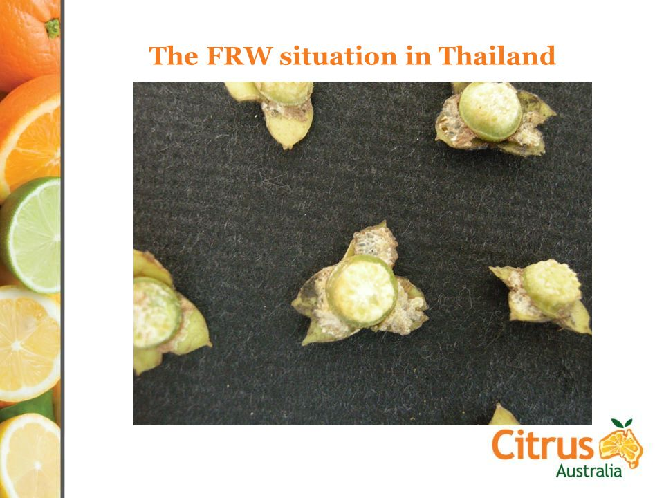 The FRW situation in Thailand