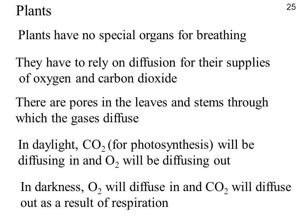 Plants have no special organs for breathing They have to rely on diffusion for their supplies of oxygen and carbon dioxide There are pores in the leav