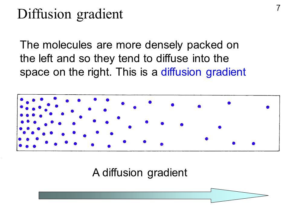 A diffusion gradient The molecules are more densely packed on the left and so they tend to diffuse into the space on the right. This is a diffusion gr
