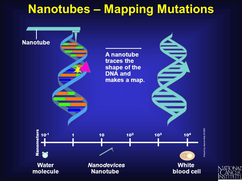 Nanotubes – Mapping Mutations A nanotube traces the shape of the DNA and makes a map. Nanotube White blood cell Water molecule Nanodevices Nanotube