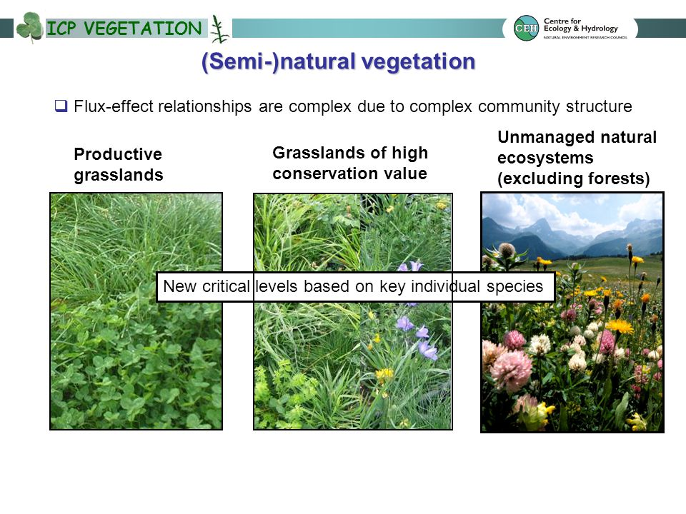 ICP VEGETATION Productive grasslands Grasslands of high conservation value Unmanaged natural ecosystems (excluding forests) (Semi-)natural vegetation