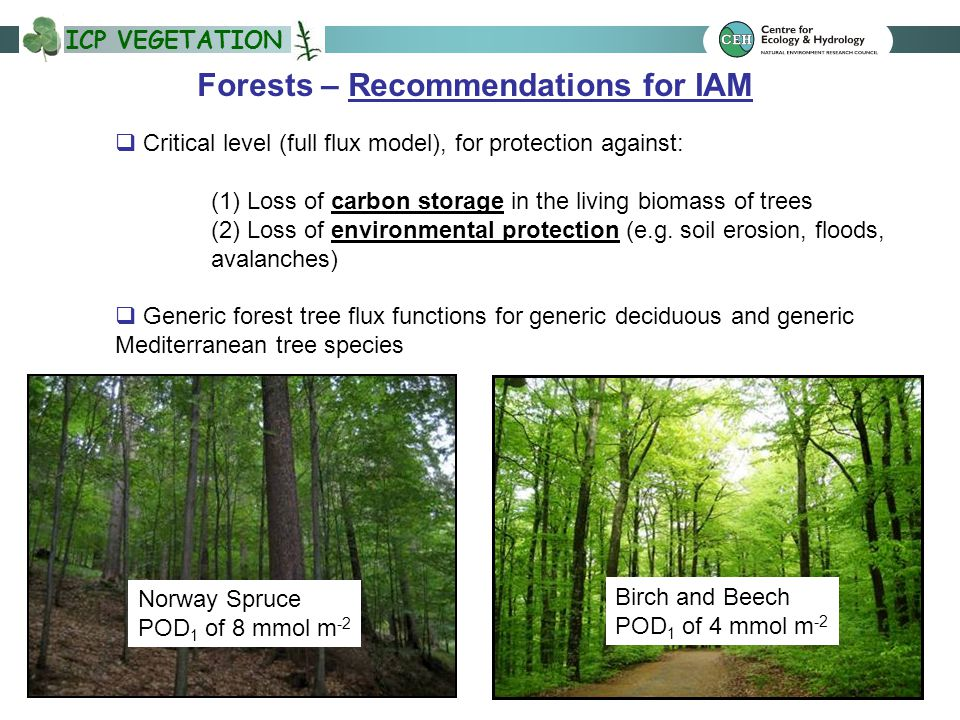 ICP VEGETATION Forests – Recommendations for IAM  Critical level (full flux model), for protection against: (1) Loss of carbon storage in the living
