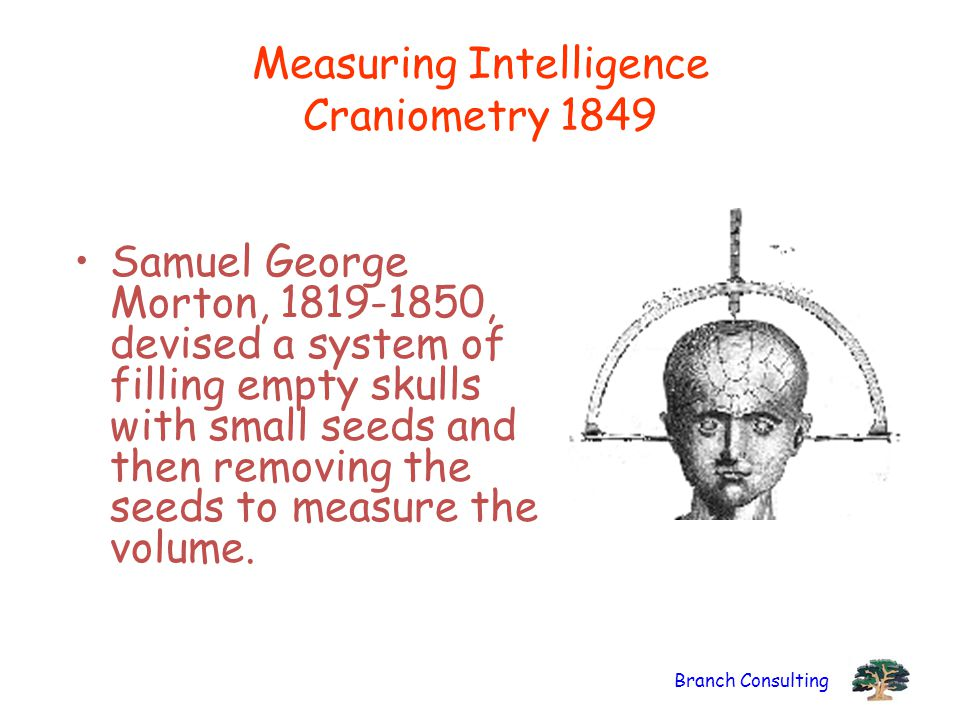 Branch Consulting Measuring Intelligence Craniometry 1849 Samuel George Morton, 1819-1850, devised a system of filling empty skulls with small seeds a