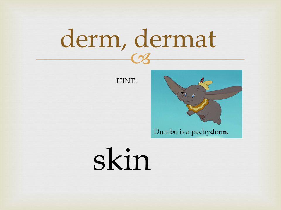  derm, dermat skin HINT: Dumbo is a pachy derm.