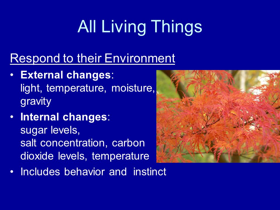 All Living Things Respond to their Environment External changes: light, temperature, moisture, gravity Internal changes: sugar levels, salt concentration, carbon dioxide levels, temperature Includes behavior and instinct