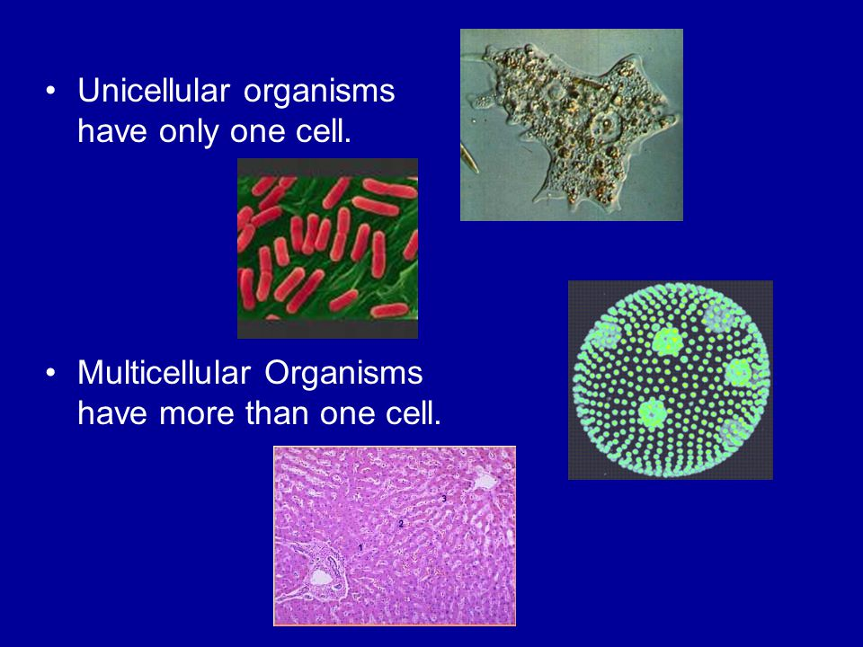 Unicellular organisms have only one cell. Multicellular Organisms have more than one cell.