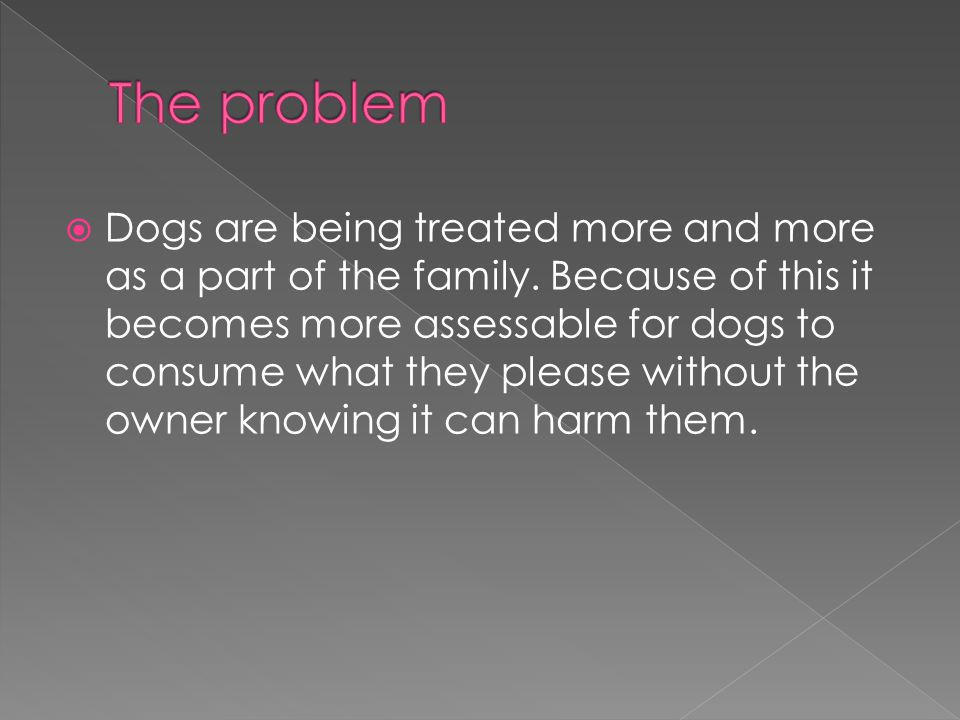  Dogs are being treated more and more as a part of the family.