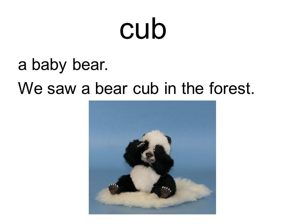 cub a baby bear. We saw a bear cub in the forest.