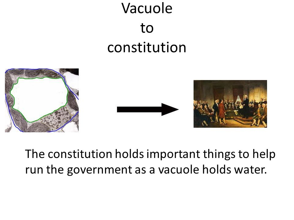 Vacuole to constitution The constitution holds important things to help run the government as a vacuole holds water.