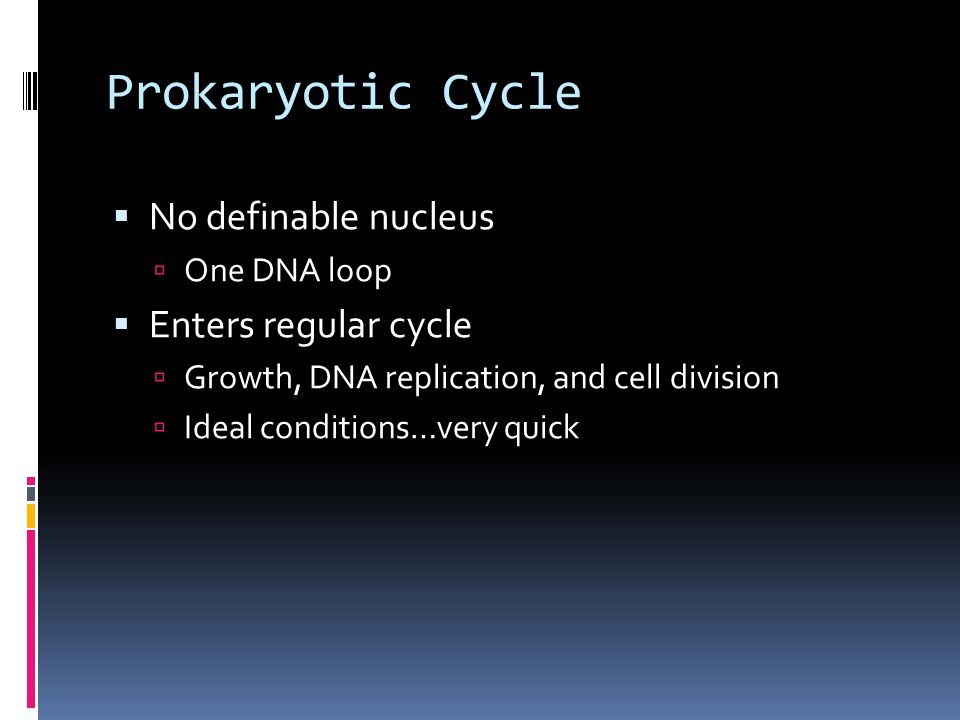 Prokaryotic Cycle  No definable nucleus  One DNA loop  Enters regular cycle  Growth, DNA replication, and cell division  Ideal conditions…very quick