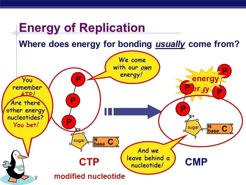AP Biology DNA Polymerase III Replication: 2nd step But … We ' re missing something.