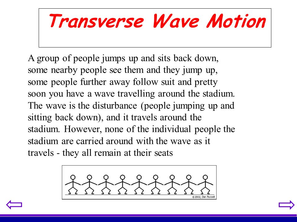 Transverse Wave Motion A group of people jumps up and sits back down, some nearby people see them and they jump up, some people further away follow su