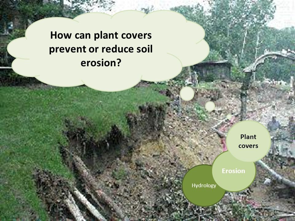 Hydrology Erosion Plant covers How can plant covers prevent or reduce soil erosion?