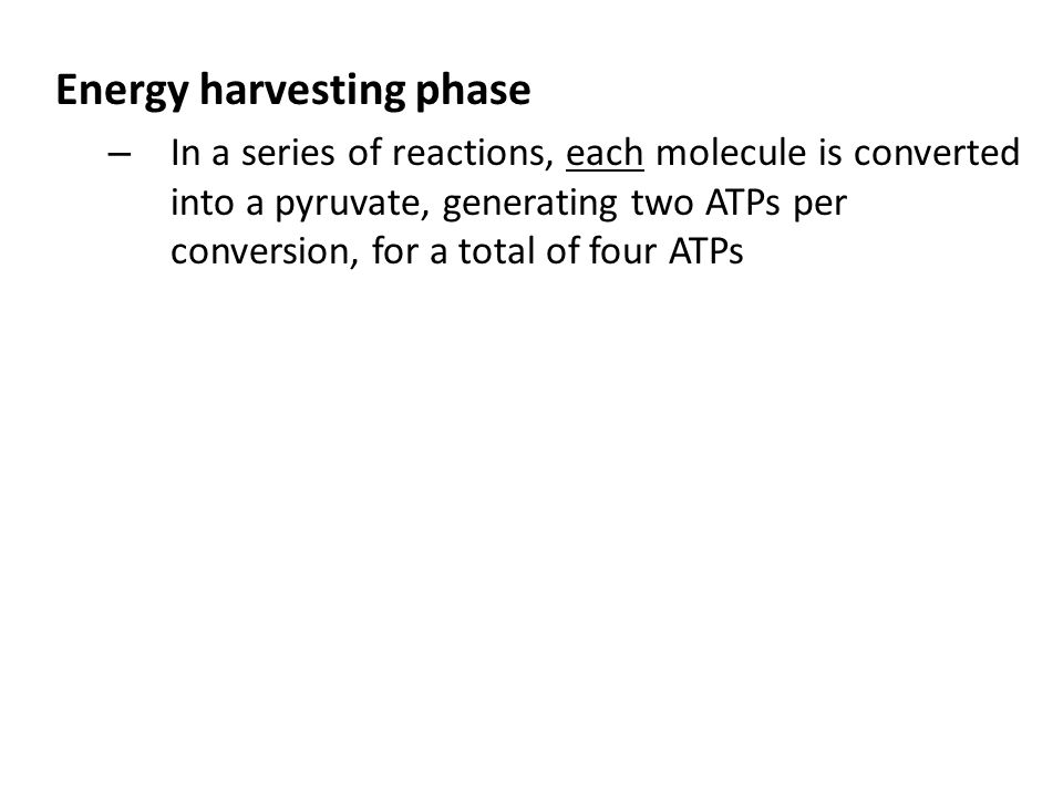 Energy harvesting phase – In a series of reactions, each molecule is converted into a pyruvate, generating two ATPs per conversion, for a total of four ATPs