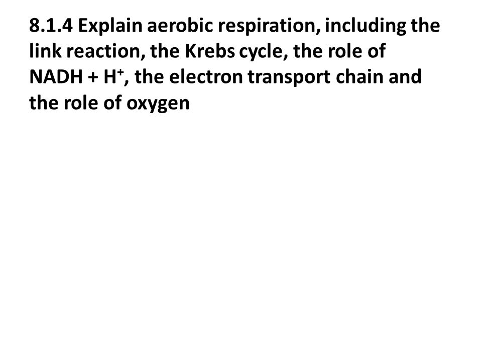 8.1.4 Explain aerobic respiration, including the link reaction, the Krebs cycle, the role of NADH + H +, the electron transport chain and the role of oxygen