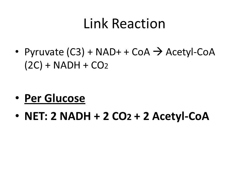Link Reaction Pyruvate (C3) + NAD+ + CoA  Acetyl-CoA (2C) + NADH + CO 2 Per Glucose NET: 2 NADH + 2 CO 2 + 2 Acetyl-CoA