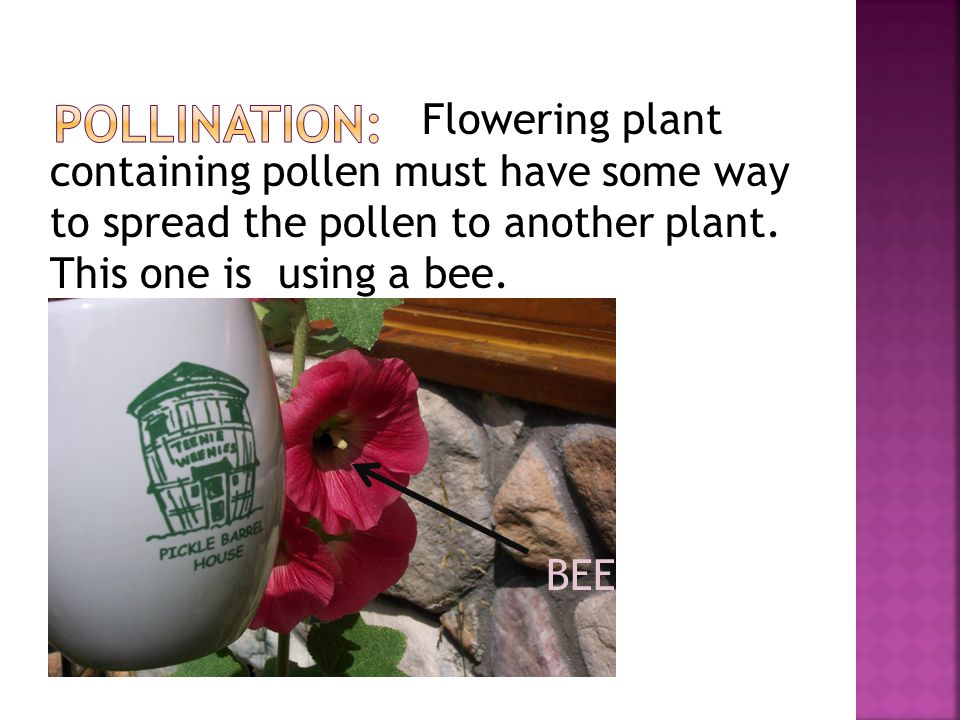 Flowering plant containing pollen must have some way to spread the pollen to another plant.