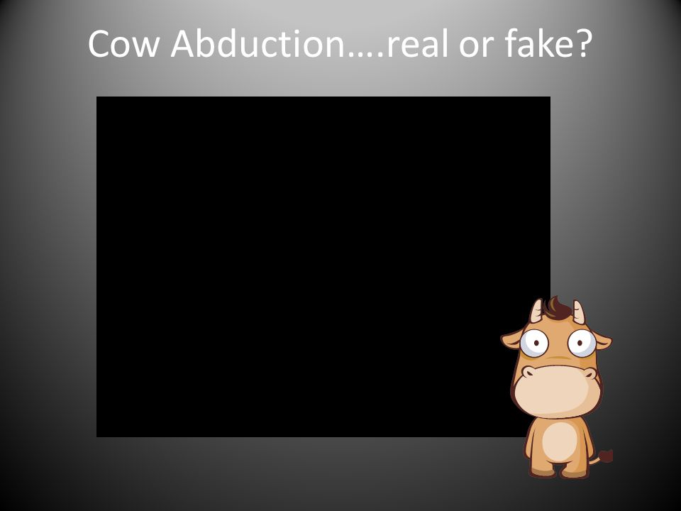 Cow Abduction….real or fake?