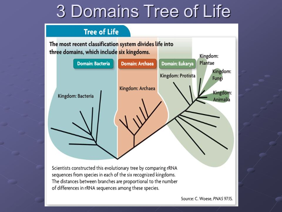 3 Domains Tree of Life