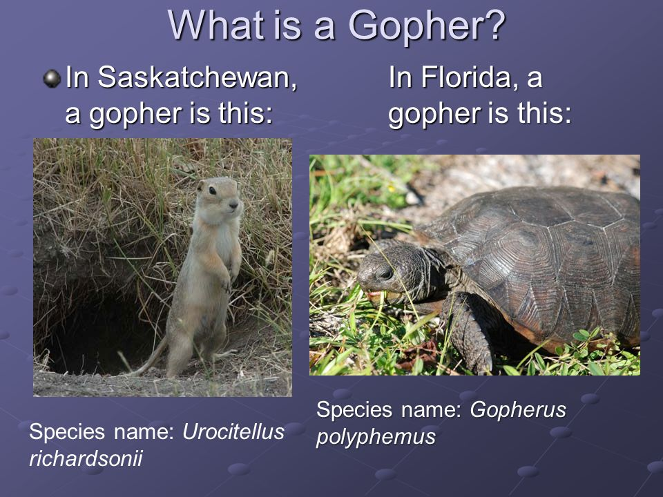 What is a Gopher.