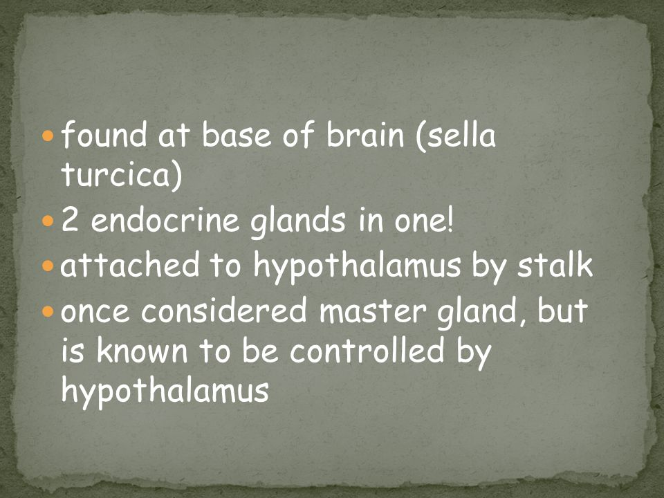 found at base of brain (sella turcica) 2 endocrine glands in one! attached to hypothalamus by stalk once considered master gland, but is known to be c