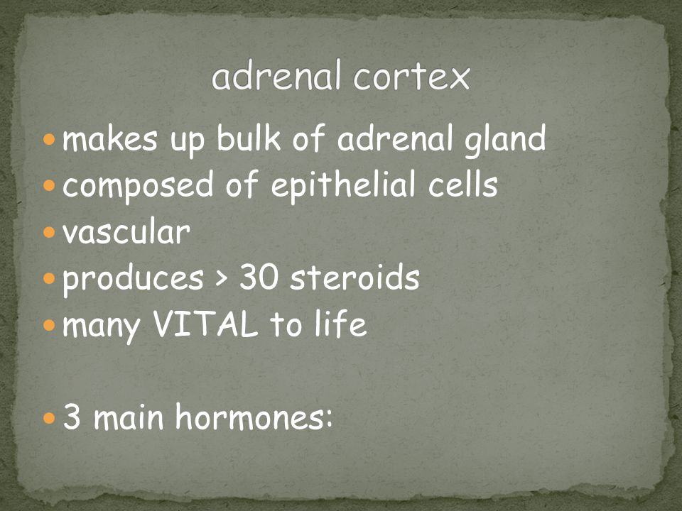 makes up bulk of adrenal gland composed of epithelial cells vascular produces > 30 steroids many VITAL to life 3 main hormones: