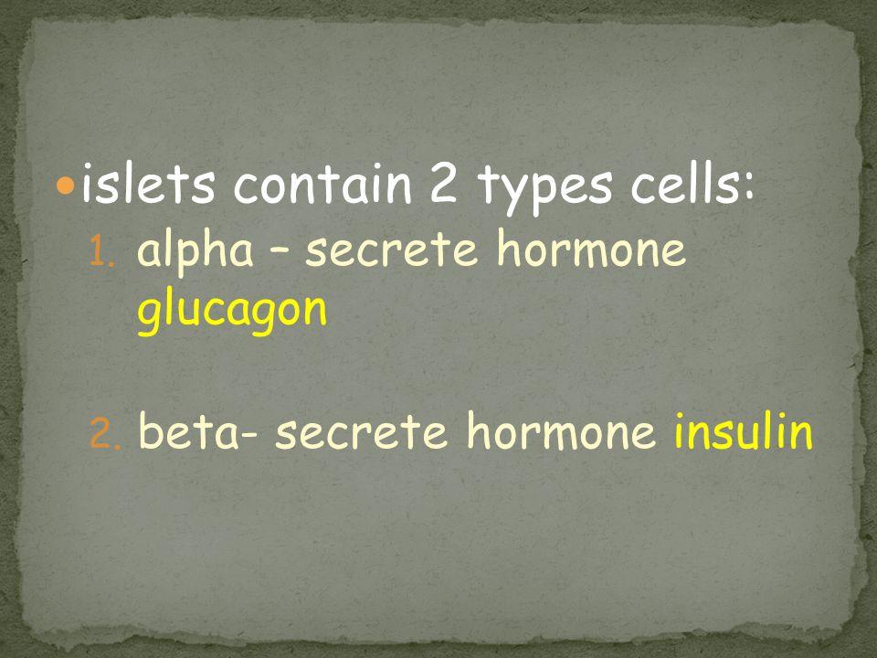 islets contain 2 types cells: 1. alpha – secrete hormone glucagon 2. beta- secrete hormone insulin