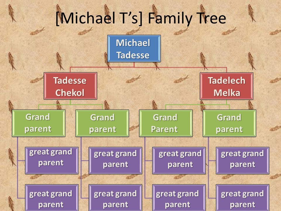 [Michael T's] Family TreeMichaelTadesse TadesseChekolTadelechMelka Grand parent great grand parent Grand parent Grand GrandParent Grand parent great grand parent