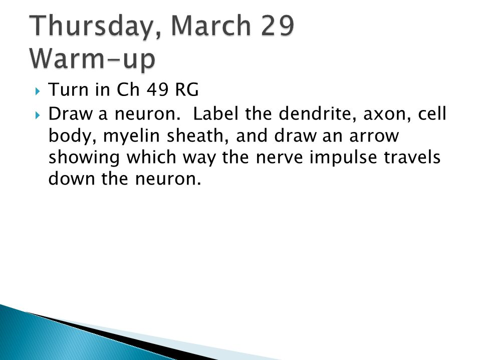  Turn in Ch 49 RG  Draw a neuron. Label the dendrite, axon, cell body, myelin sheath, and draw an arrow showing which way the nerve impulse travels