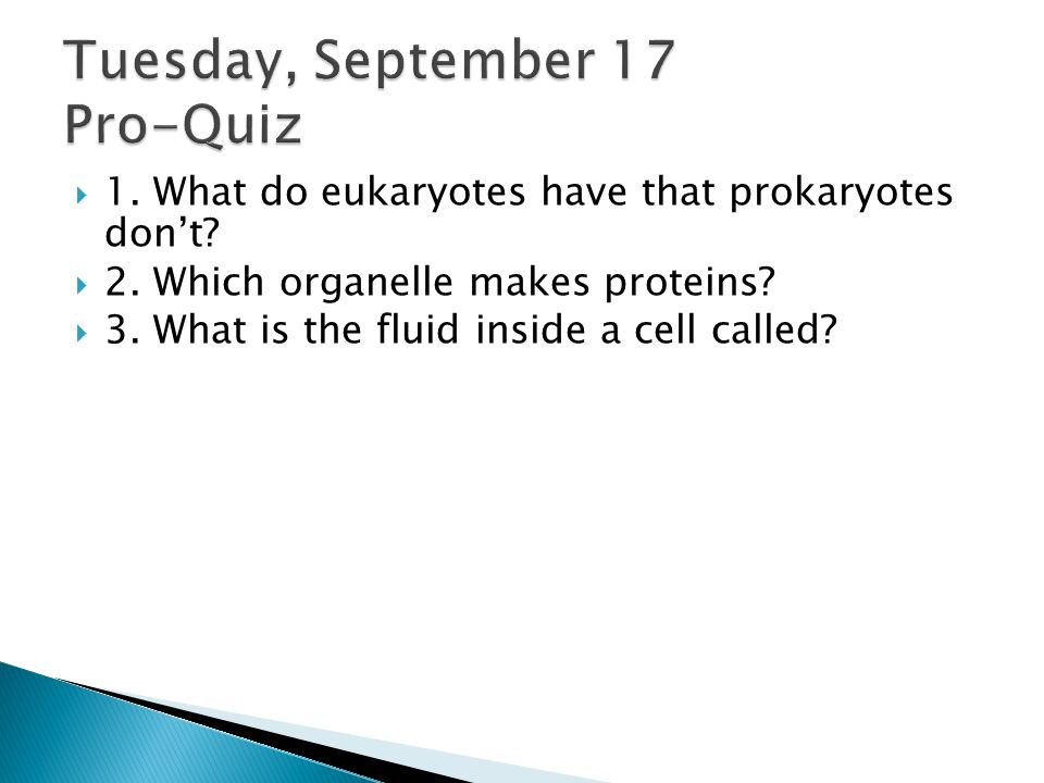  1.What do eukaryotes have that prokaryotes don't.