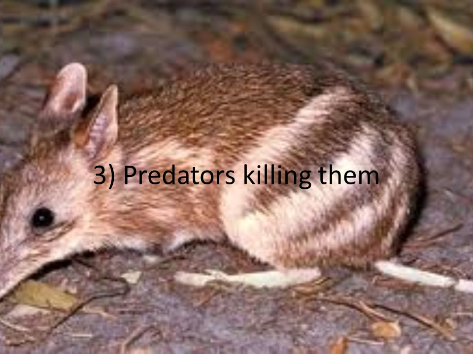 3) Predators killing them